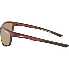 Alpina Defey Glasses brown transparent matt/gold mirror